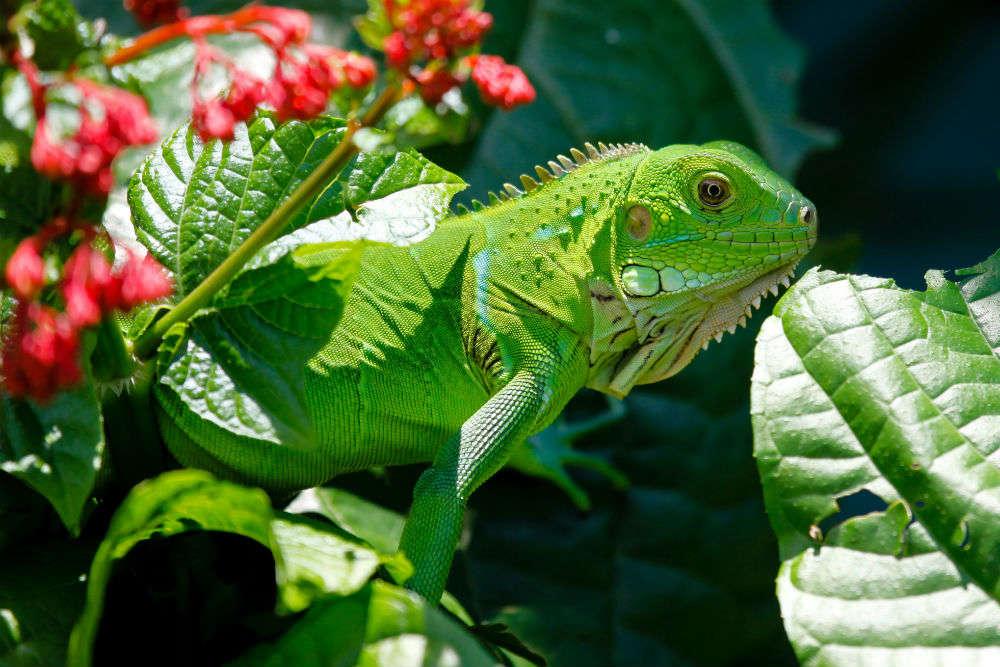 Kula Eco Park, Viti Levu