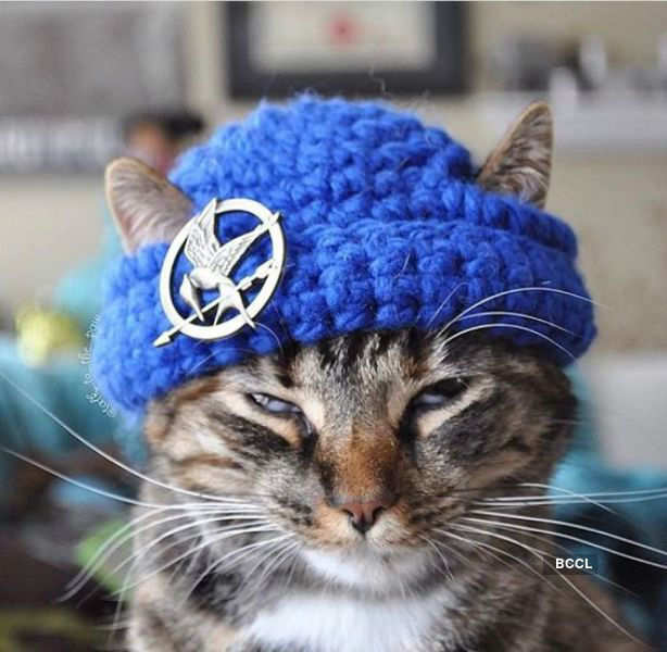 When cats get stylish