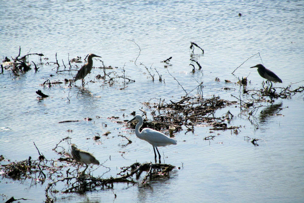 Visit the Water Bird Sanctuary