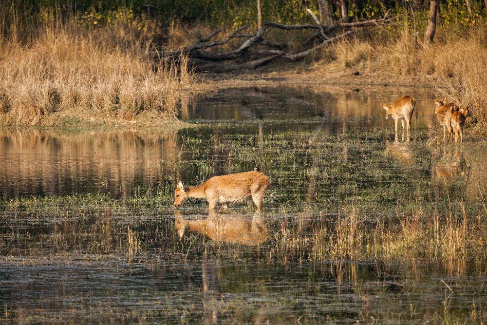 List of wildlife sanctuaries in india | Visit wildlife