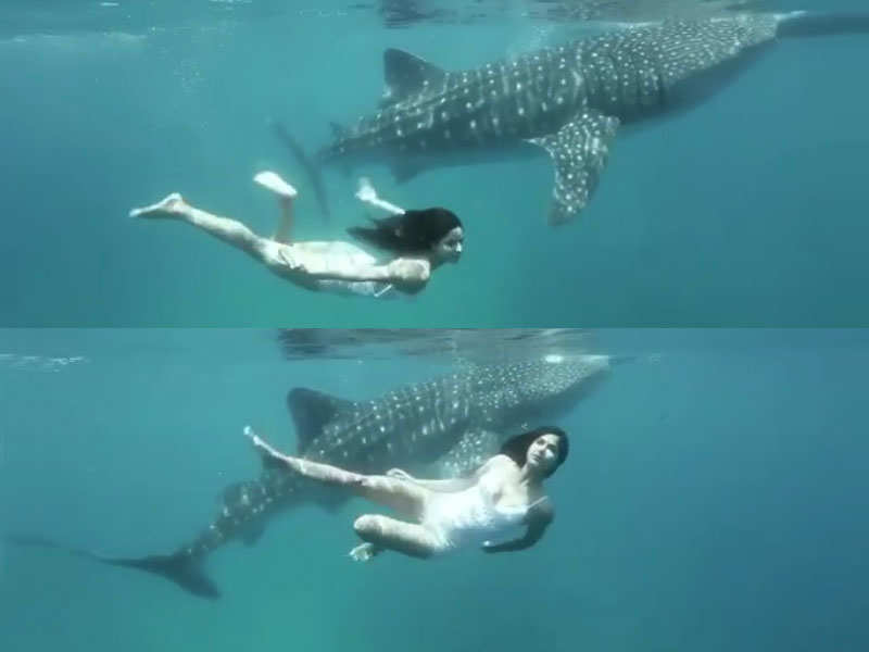 Watch: Katrina Kaif swims with sharks in this latest video