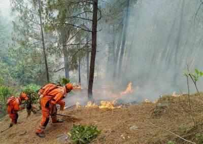 forest fire: Latest News, Videos and forest fire Photos | Times of India