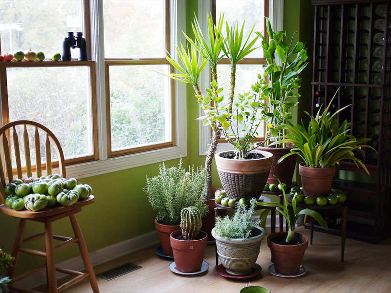 5 plants that release oxygen at night! | The Times of India