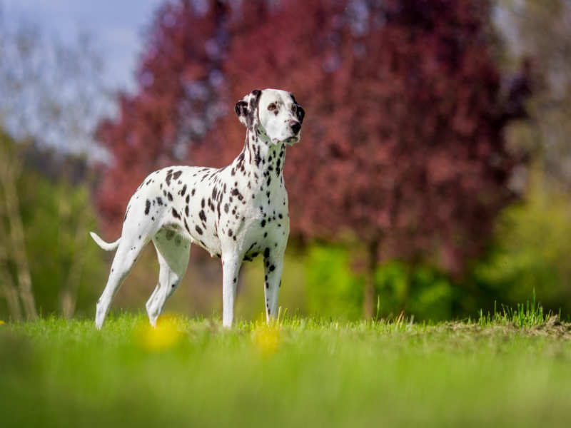 8 Popular Dog Breeds in India