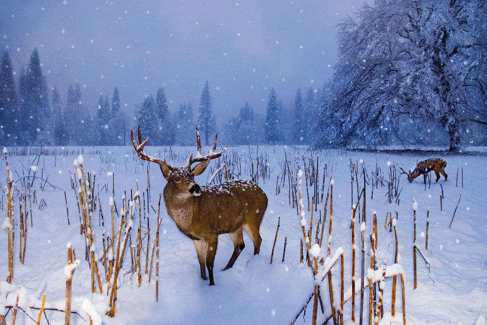 Kashmir in winter season: the best pictures ones you can lay your eyes on! - Kashmir in winter season: the best pictures you can lay your eyes on!