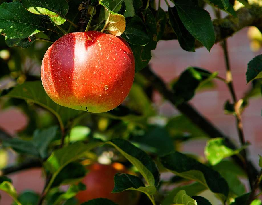7 fruit trees you can grow in your homes | The Times of India
