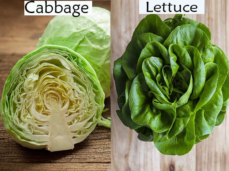 What S The Difference Between Cabbage And Lettuce The Times Of