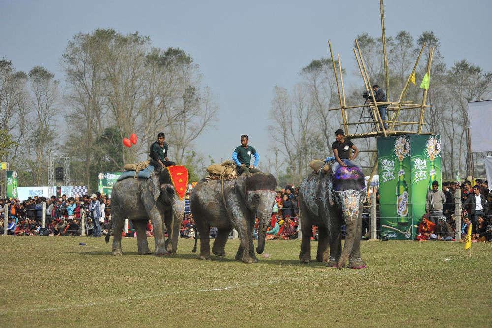 Nepal's Elephant festival : Elephant Festival begins in