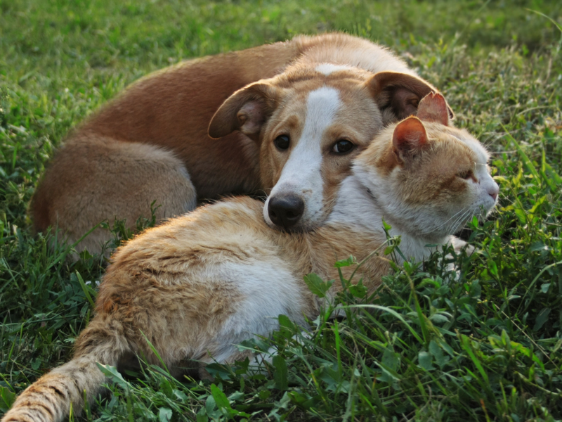 Cats vs. dogs: Who is a better pet?