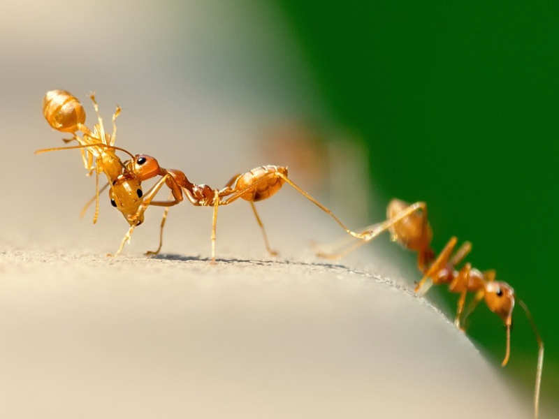 5 cheap and easy ways to get rid of ants