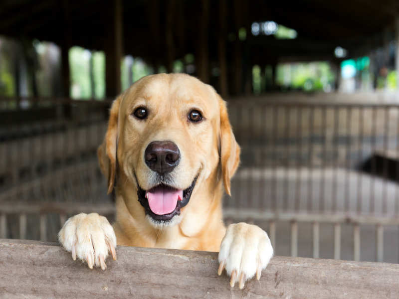 5 life lessons that my pet dog taught me | The Times of India