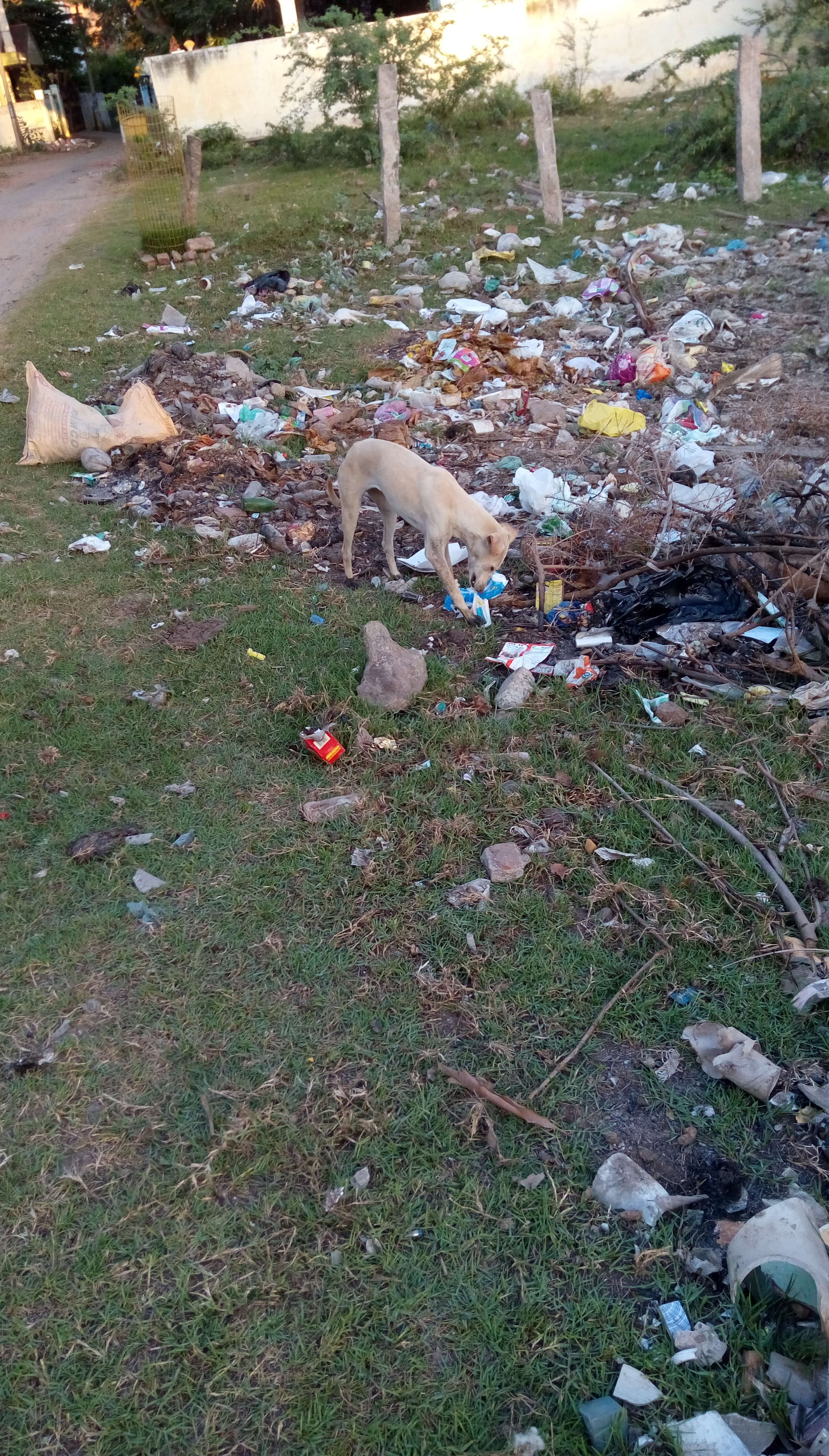 Feeding stray dogs with diapers? - Times of India