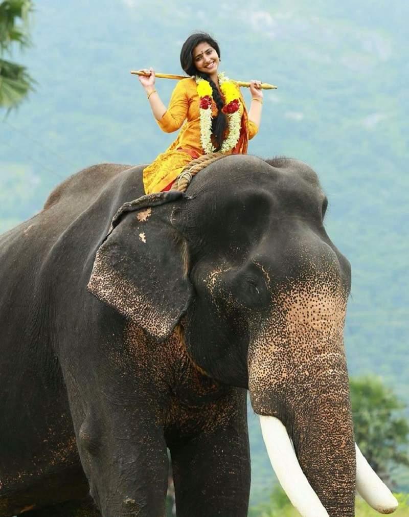 Anu Sithara Photos Mollywood Actress Anu Sithara Hot Sexy Hd