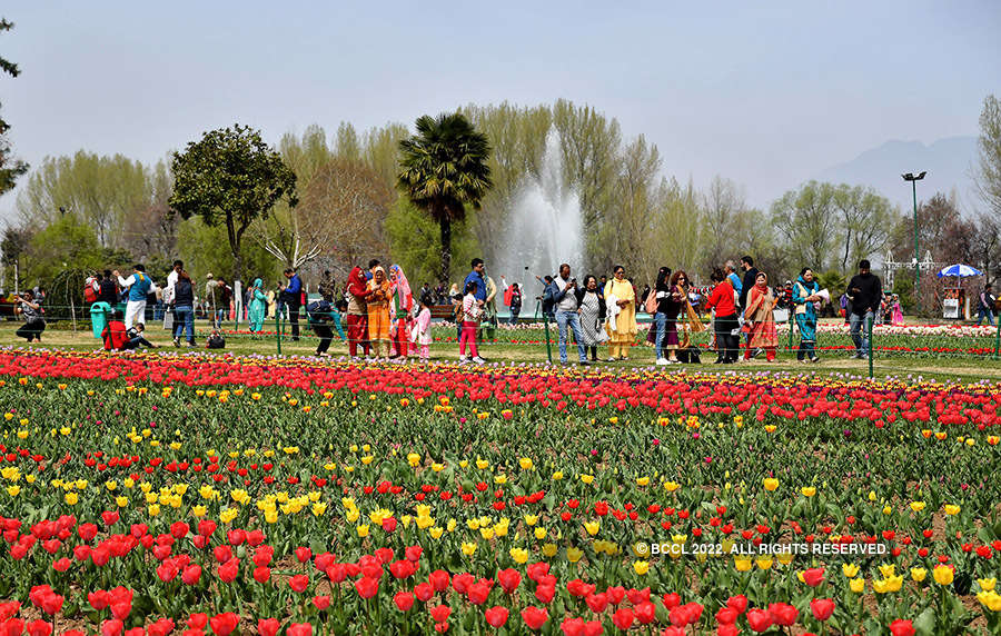 Tulip Garden in Srinagar thrown open for visitors