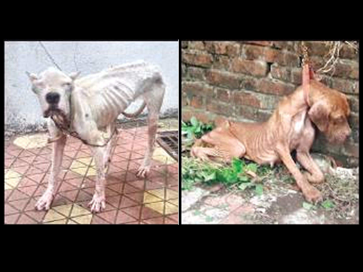 9 starving canines eating own poop rescued from Mumbai