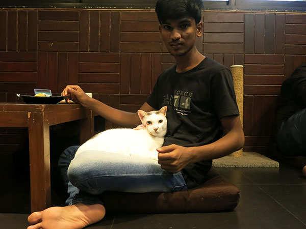 cat_lap