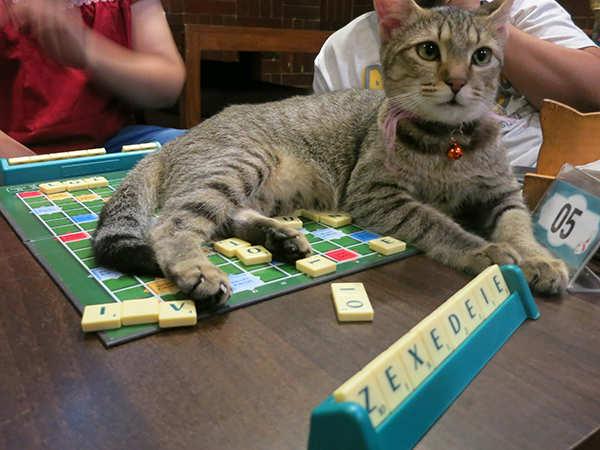 cat-dice