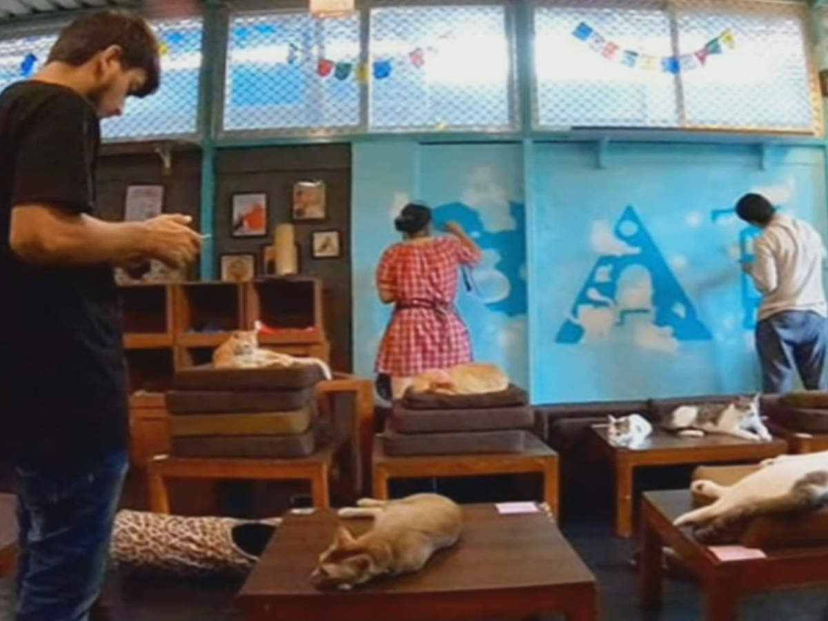 When Mumbaikars spent time at a cat cafe!