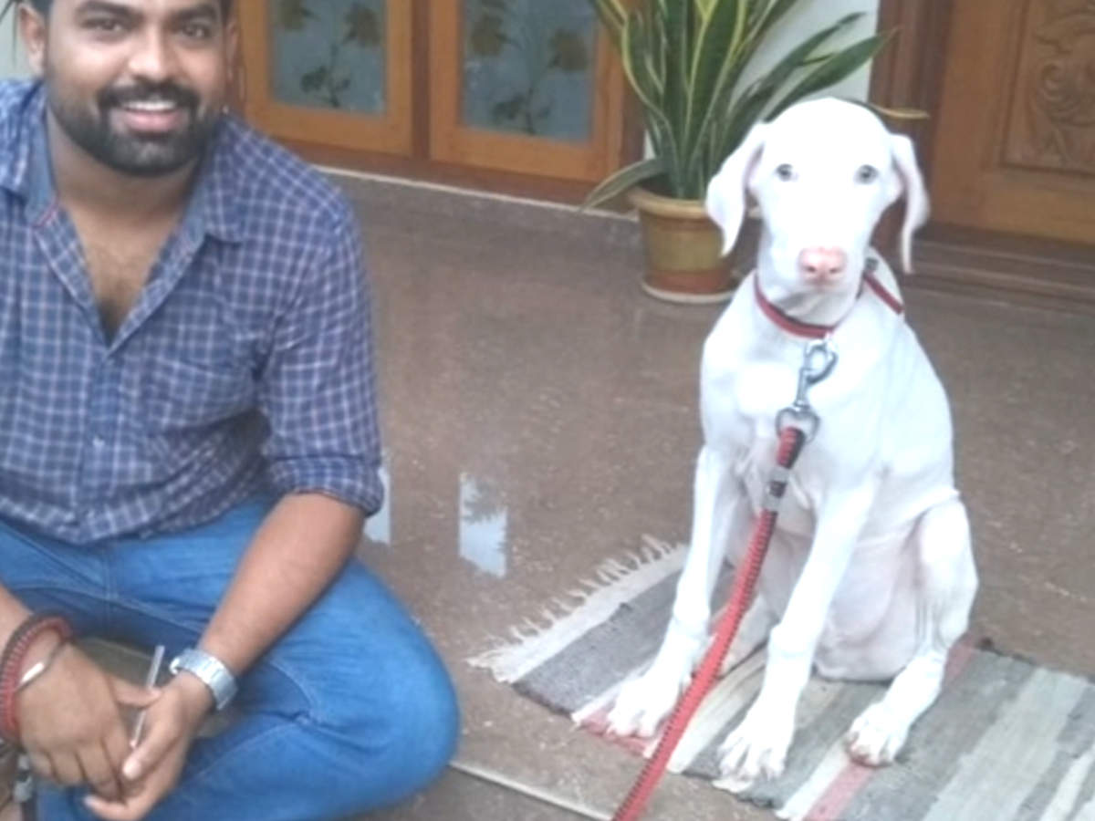 ''I have never come across a breed as loving as the Rajapalayam''