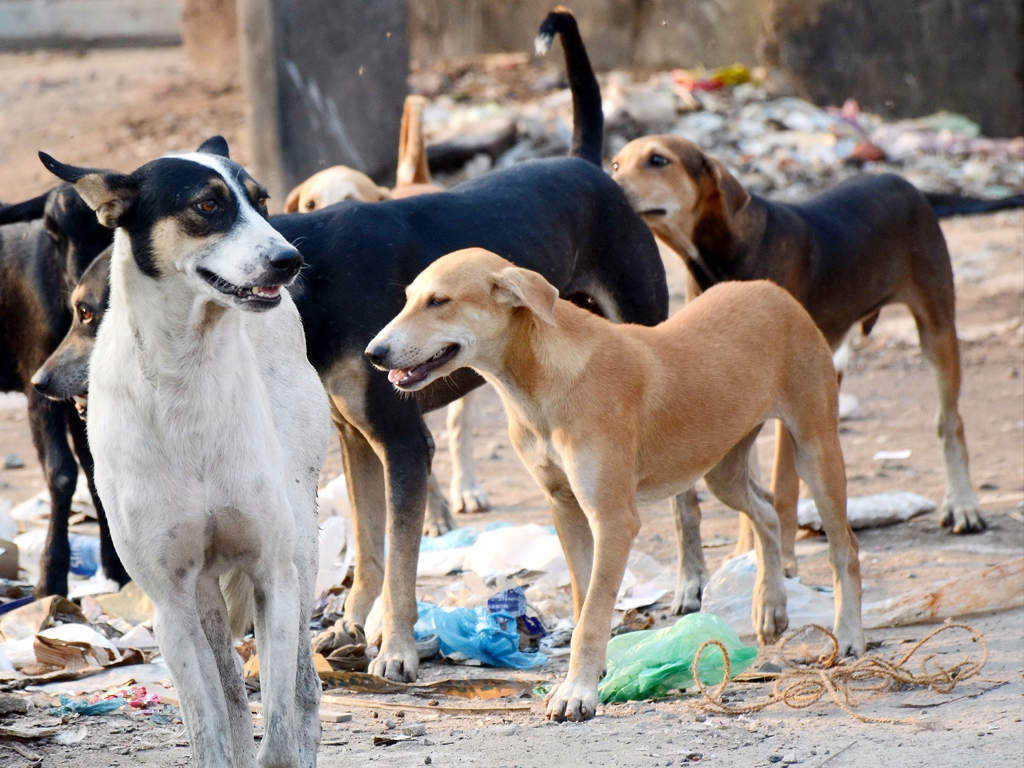 Image result for latest images of 11-yr-old boy battles for life after canine attack in Bengaluru