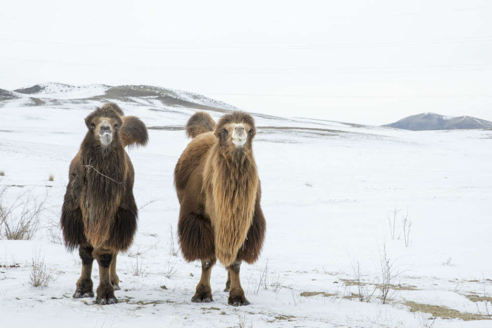 Reasons why Mongolia will be your wildest trip ever
