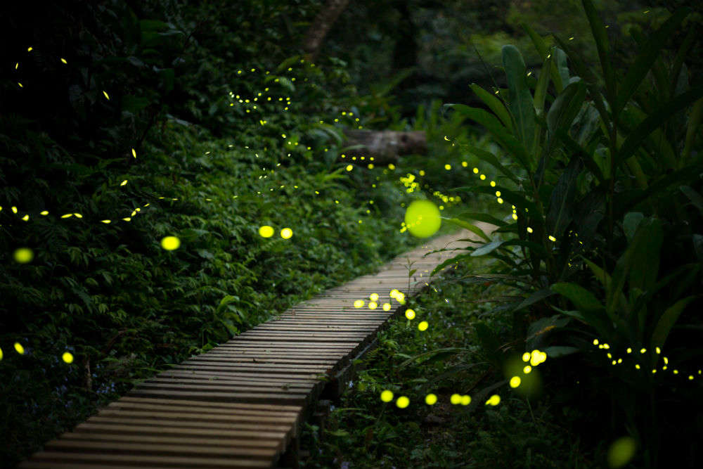 Image result for firefly indiatimes