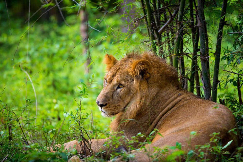 Safari in March