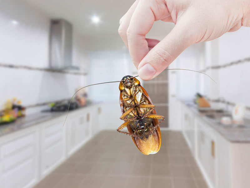 10 brilliant ways to remove cockroaches from your kitchen