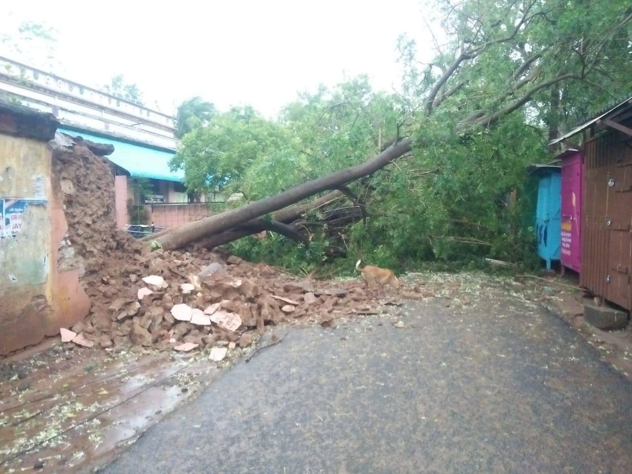 Cyclone Gaja Chennai: Gaja cyclone wreaks damage in Tamil Nadu