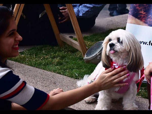 pet-dog-show-thane-(10)