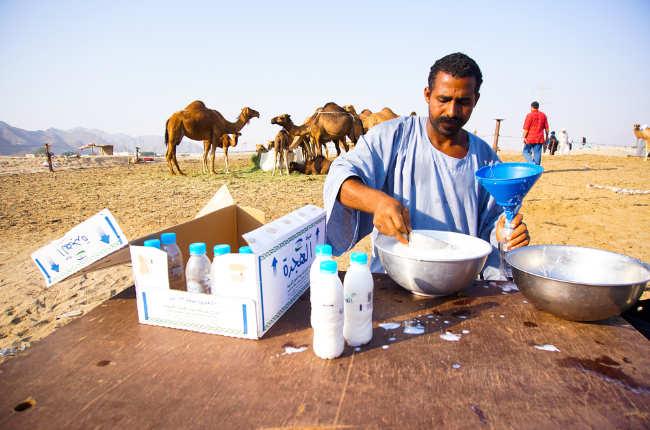 Camel milk in deserts