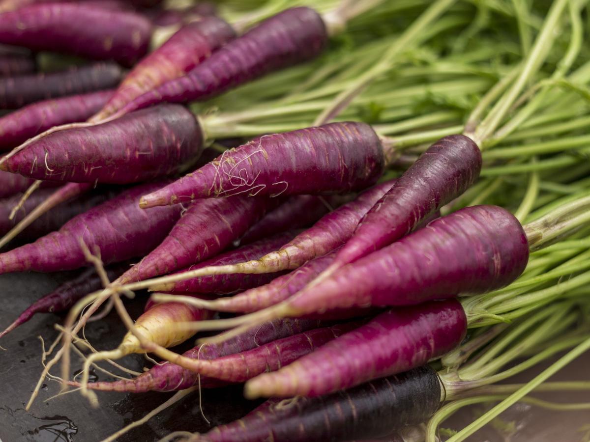 Health benefits of Purple Carrot