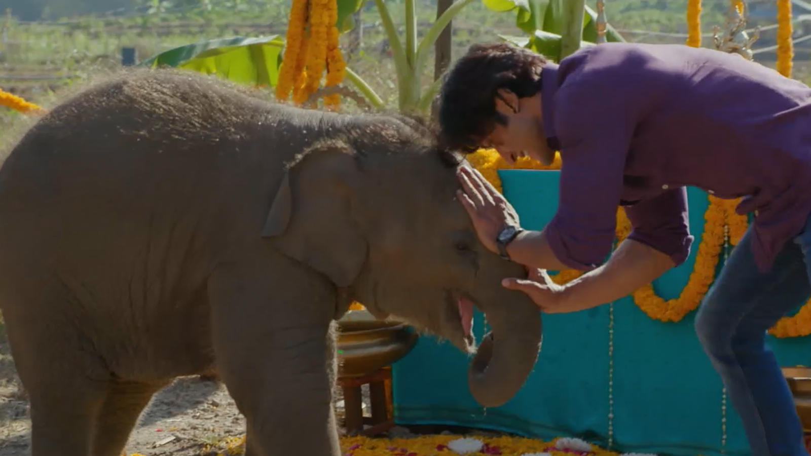 Meet the adorable baby elephant from Vidyut Jammwal starrer 'Junglee'