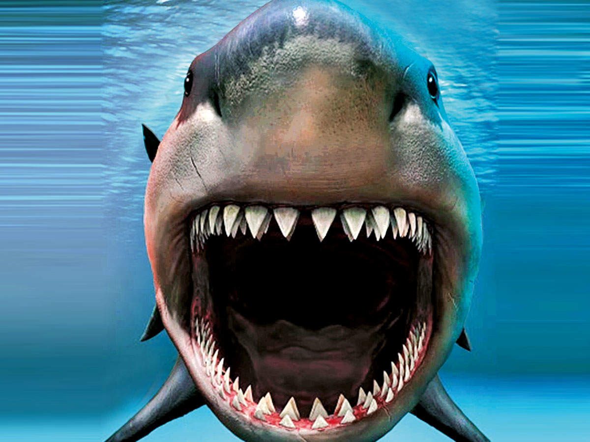 Chew On This: This Telugu man is now the proud owner of prehistoric  megalodon shark teeth! | Events Movie News - Times of India