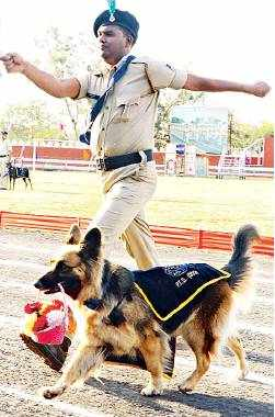 Police and their pooches wow the city with their stunts2
