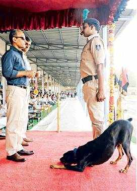 Police and their pooches wow the city with their stunts3