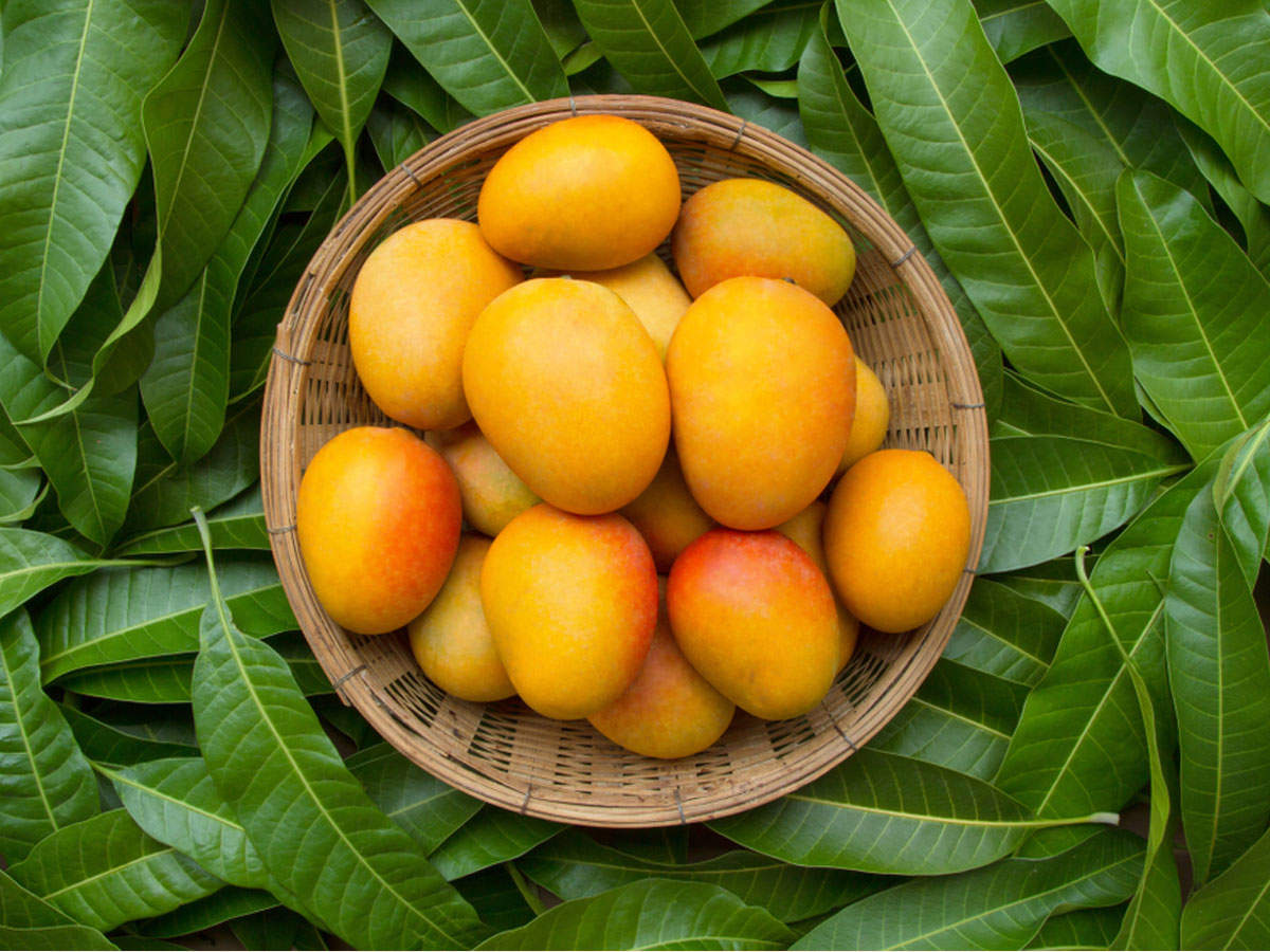 15 yummy Indian mango varieties and how to identify them | The ...