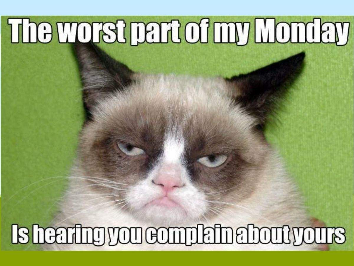 grumpy cat thumb (1)