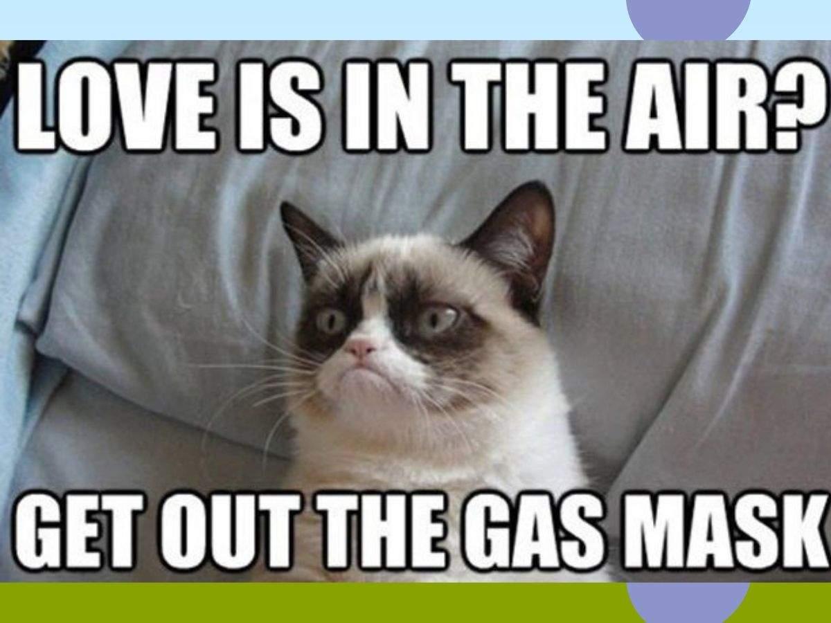 grumpy cat meme (2)