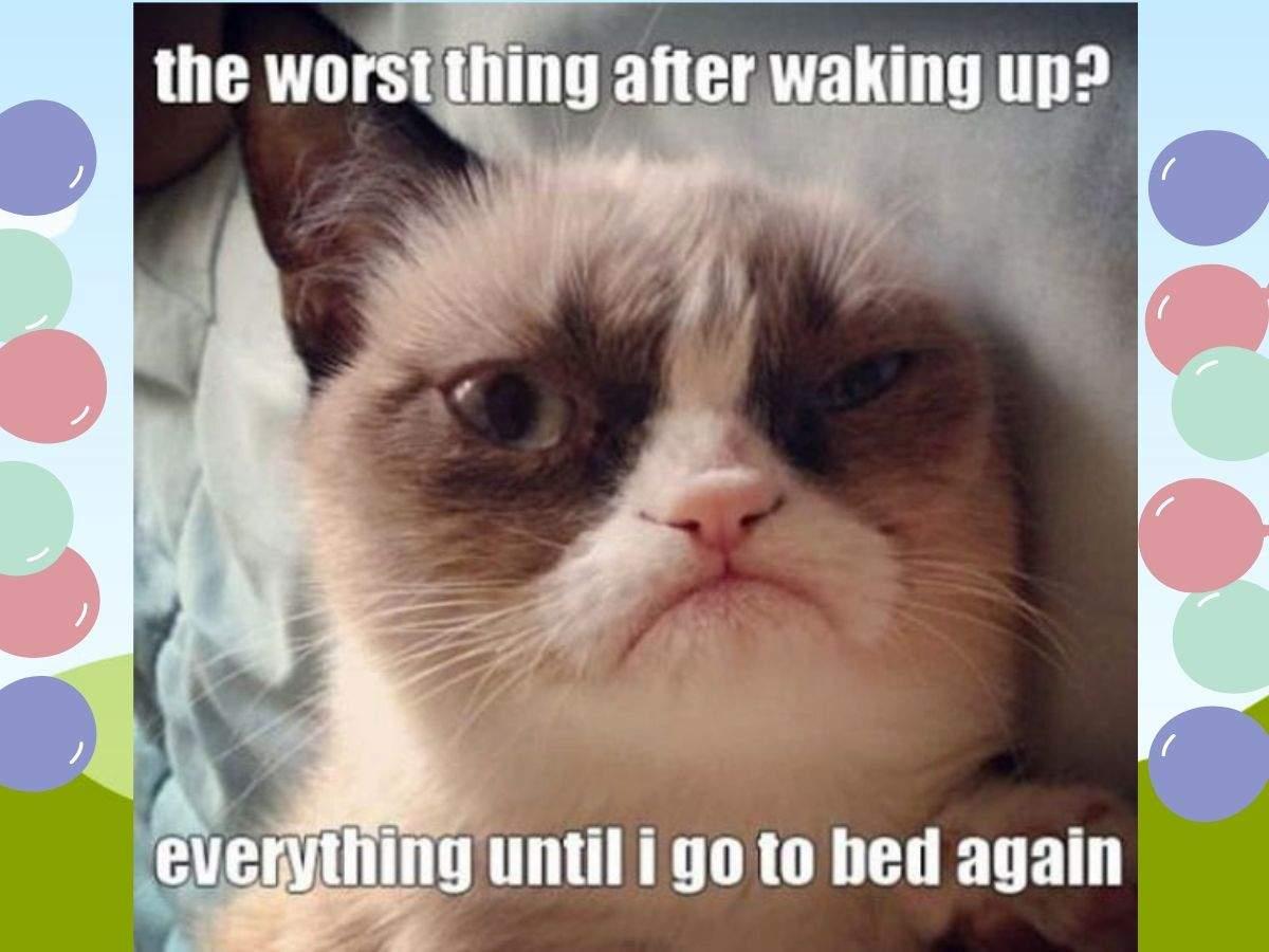 grumpy cat meme (3)