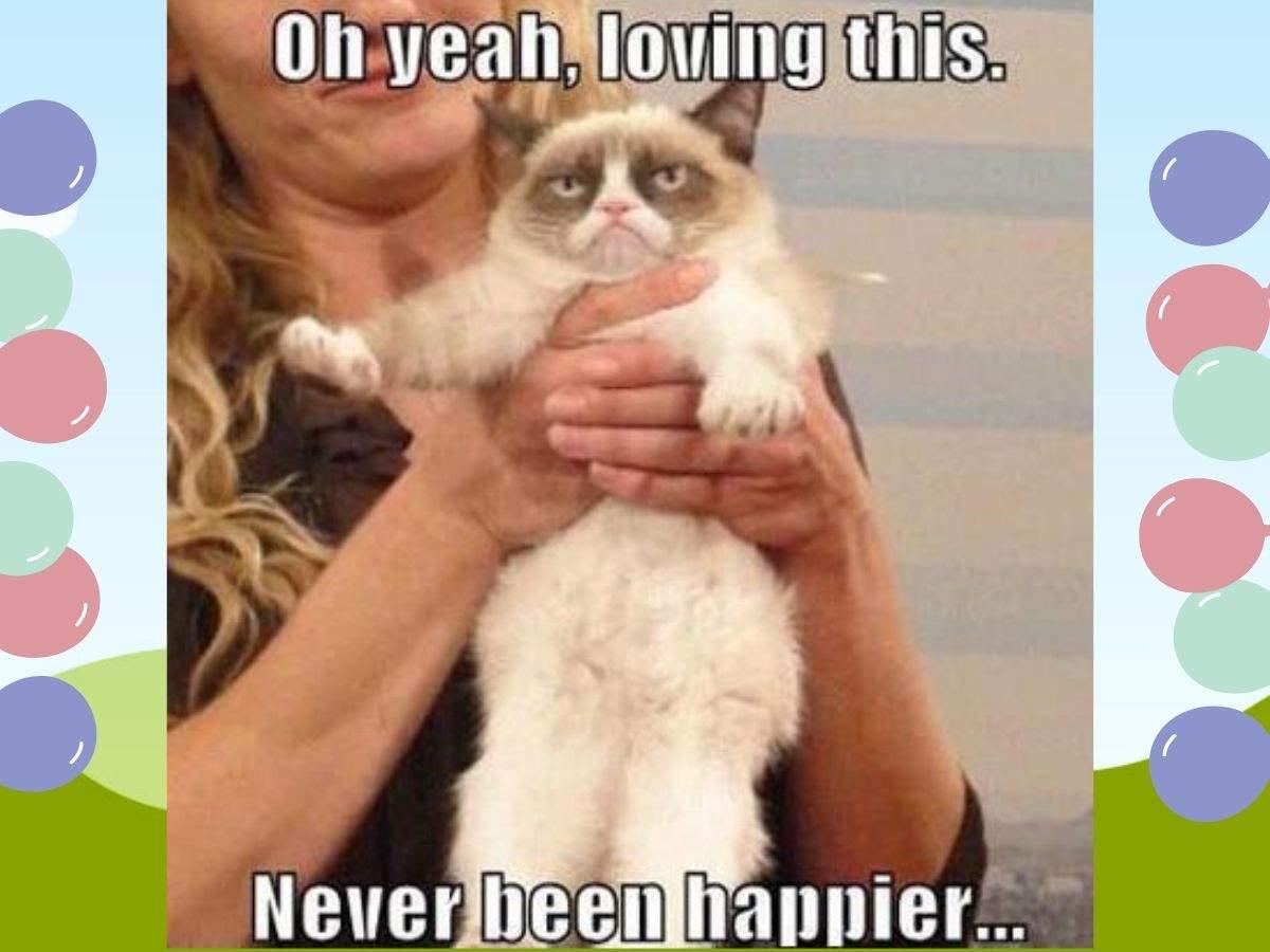 grumpy cat meme (4)