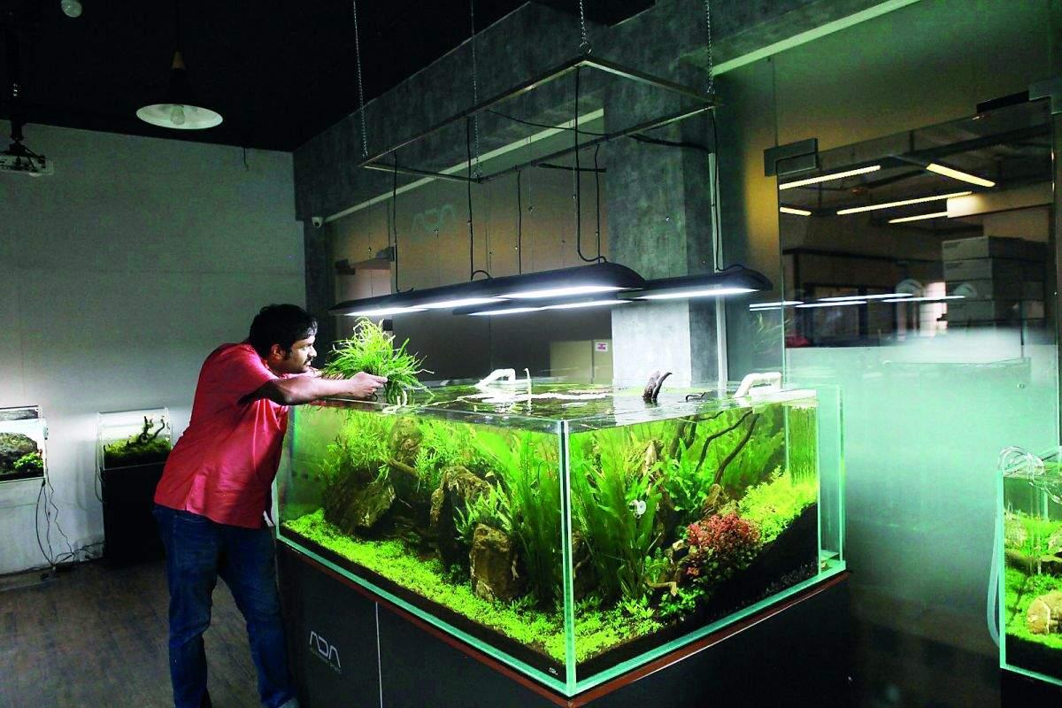 hobbies-aquarium