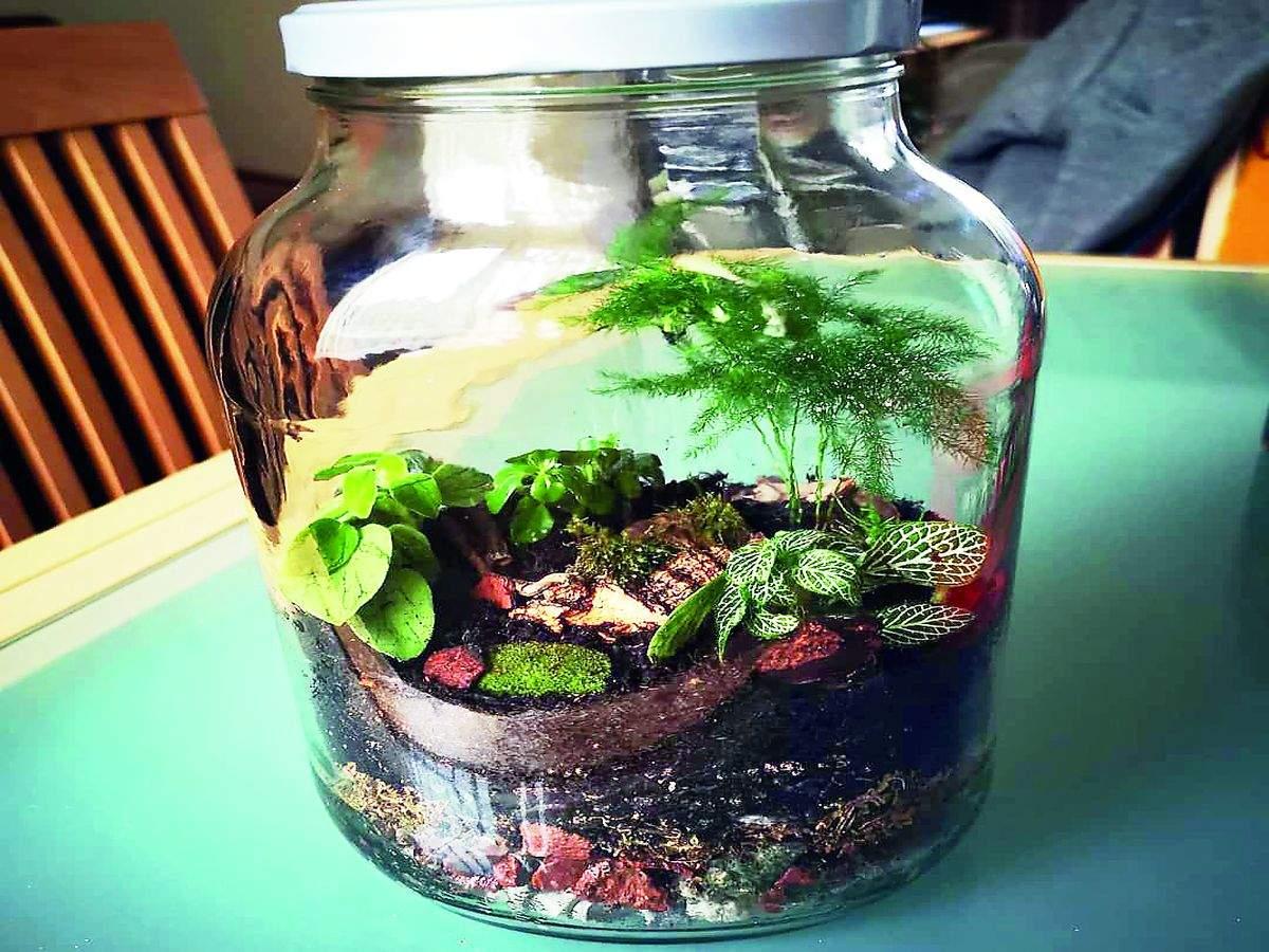 hobbies-terrarium