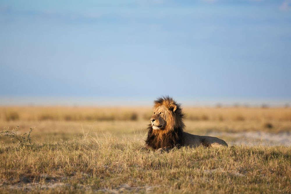 The new African Safari