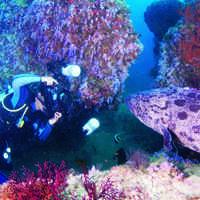 Reborn Underwater