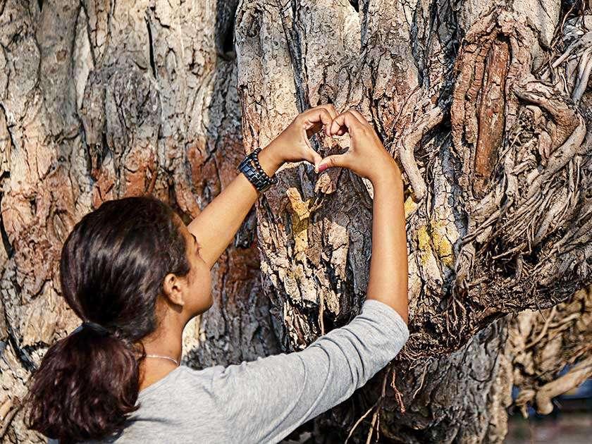 pg3_tree_thumb