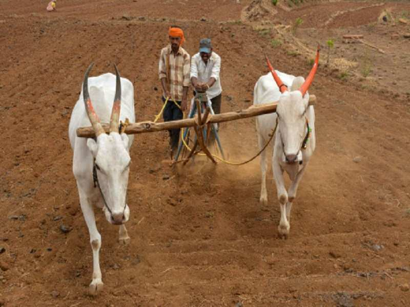 2f6d52e3599 PM Narendra Modi's income support scheme will benefit over 8 lakh ...