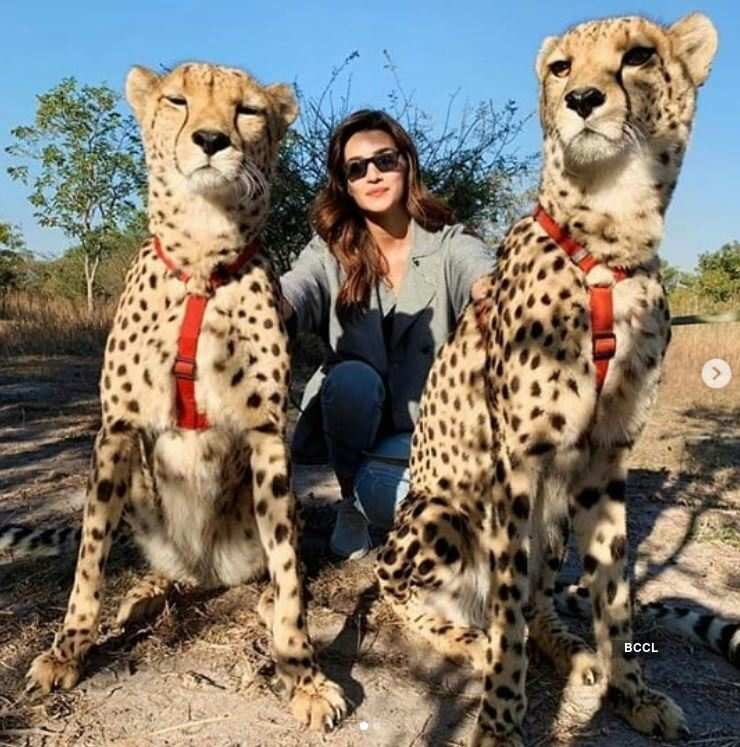 Kriti Sanon showcases her fearless side as she plays with cheetahs in Zambia
