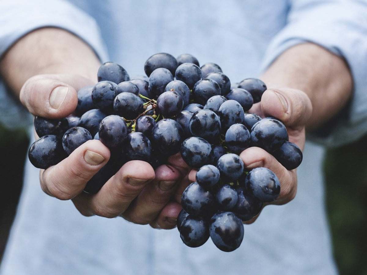 Eating too many grapes in one go can be a little risky for you! - Times of  India
