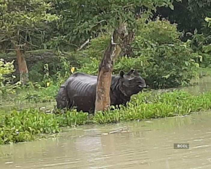 Assam flood situation turns worse; several killed, 43 lakh people affected
